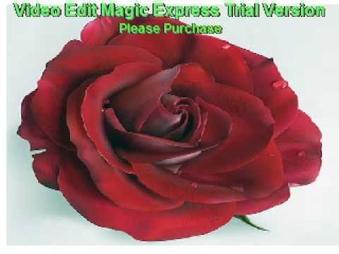 Eva cassidy - My Love is Like a Red Red Rose (eng lyrics)